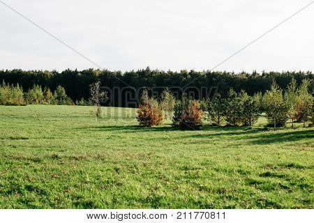 Green sunlight glade and tress on horizon. Beautiful landscape