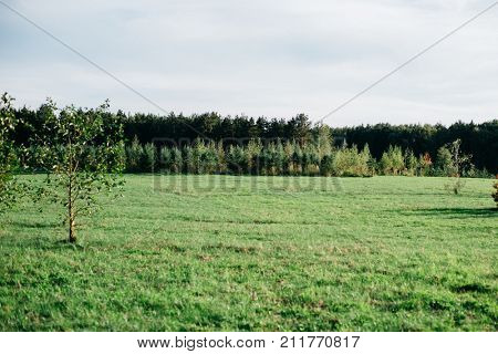 Green sunlight glade and tress on horizon. Beautiful summer landscape