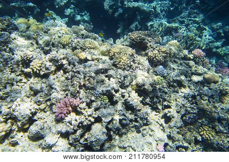 Multicolored corals on the seabed, reef,, underwater