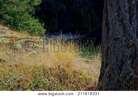 Golden Dry Grass On A Bluff Overlooking A Shaded Cove On Portland Island In The Gulf Islands British