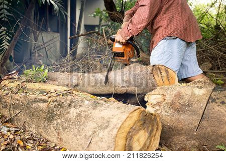 Professional chainsaw blade cutting log of wood in forest