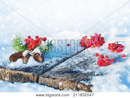 Spruce bumps with red ashberry on an old snow-covered table