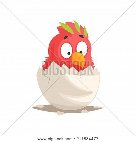 Funny newborn red parrot in broken egg shell. Nestling hatching from egg. Little creature life. Flat cartoon tiny bird pet character birthday. Cute emoji vector illustration isolated on white.