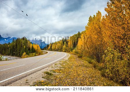 The grandiose nature of the Rockies of Canada. Migratory birds fly in flocks. The magnificent Highway 93