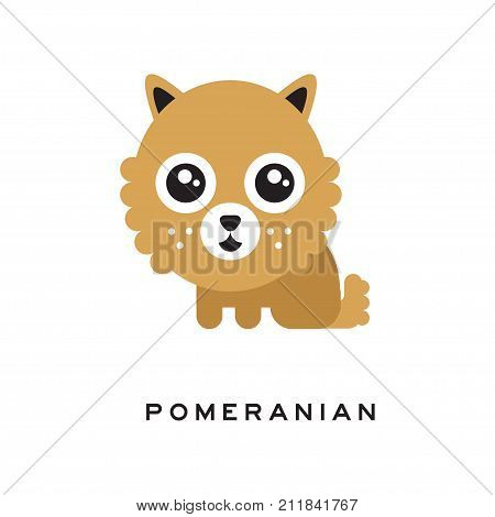 Adorable pomeranian spitz puppy with big head, brown fluffy-coat and shiny big eyes. Vector illustration of domestic toy doggie with cute muzzle in flat style. Human s best friend. Kids print design.