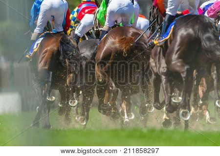 Horse Racing Legs Hoofs