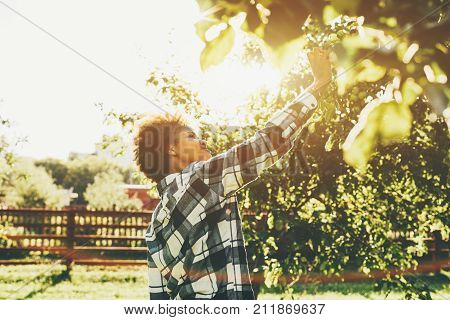 Beautiful young  girl is picking apple from apple tree in summer garden outdoors; Brazilian teenage female in checkered shirt is taking green apple from tree in city park on warm sunny day