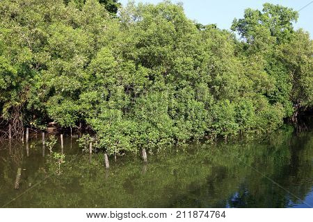 Mangrove Forest in the inter-tidal zone during high tide at Sungei Buloh Nature Reserve in Singapore
