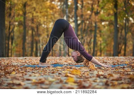 Beautiful young woman practices yoga asana downward facing dog on the wooden deck in the autumn park