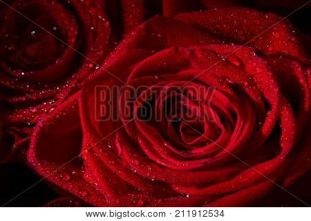 Bouquet of fresh roses flower bright background.