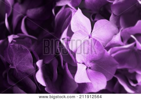 Beautiful flower background. Wallpaper made with color filters effect.