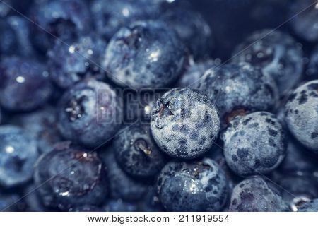 Frozen blue huckleberry also known as tall swamp or high blueberry. Frozen blue fruits. Cold fruits background