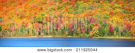 Bright autumn trees by blue water pond