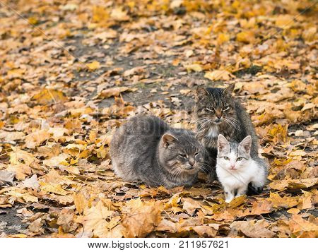 Three cats keep each other warm in autumn Park. The concept of co-existence of several animals.