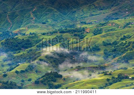 Landscape of land field and rice terrace at Sapa Vietnam