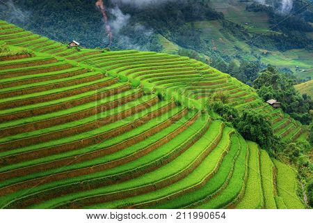 Landscape of land fields and rice terrace at Sapa Vietnam