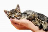 little baby cat sleeping in male arms isolated over white background poster