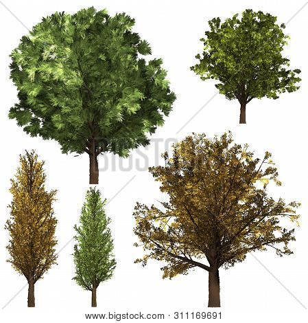 Green Forrest Tree Background. Set Illustration Tree. Background White Isolate. Nature And Gardens D