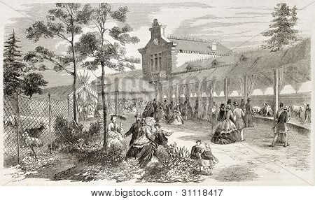 Dogs expo in Paris (Jardin d'Acclimatation) old illustration. Created by Provost, published on L'Illustration, Paris, 1863