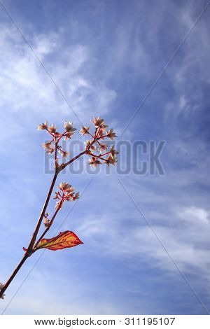 Flowers Red In Nature And Bright Sky Background