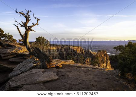 Dead Juniper Tree Located In Colorado National Monument In Grand Junction Colorado