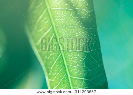 The Back Of A Beautiful Patterned Leaf