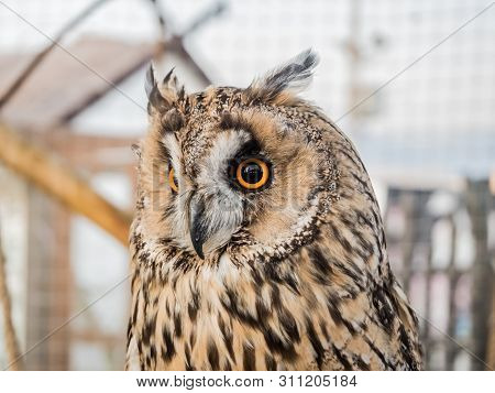 An Owl With Large Round Eyes Sits In Cage