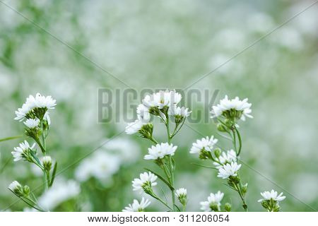 White Cutter Flower is blooming beautifullyIs a flower decorated in a bouquet of flowers