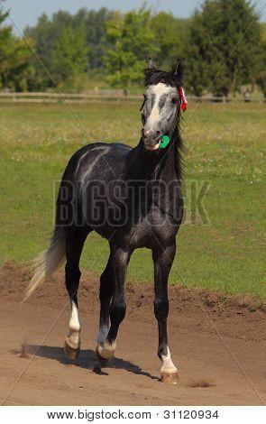 Prize-winning purebred horse