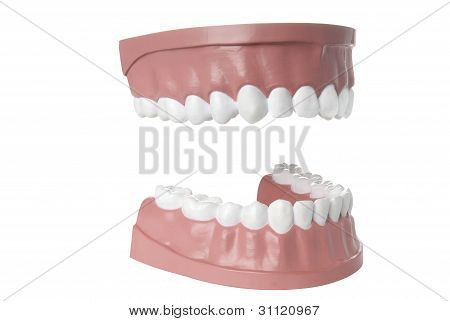Dentist's sample teeth isolated on white with clipping path