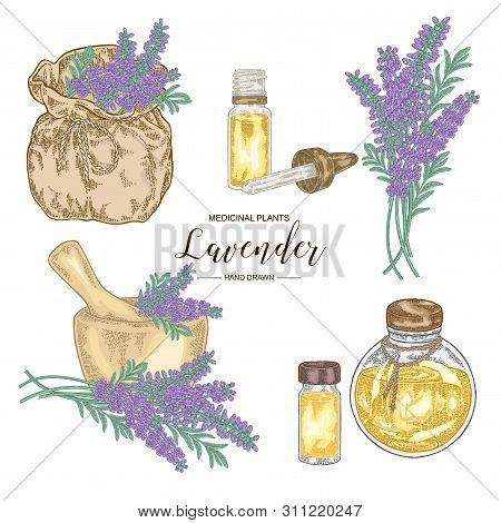 Lavender Plant Set. Lavender Flowers, Mortar, Gless Bottle Of Essential Oil And Bag. Medical Herbs H