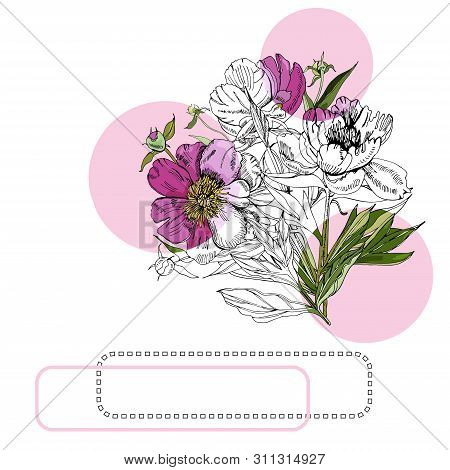 Collection With Bouquet Of Peony Flowers, Pink Circles And Frames. Hand Drawn Ink And Colored Sketch