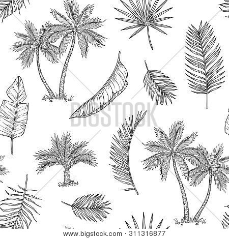 Palm Tree Seamless Background. Tropical Coconut Palm, Exotic Island. Vintage Hand Drawing Abstract F