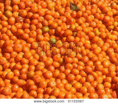 Clementine oranges