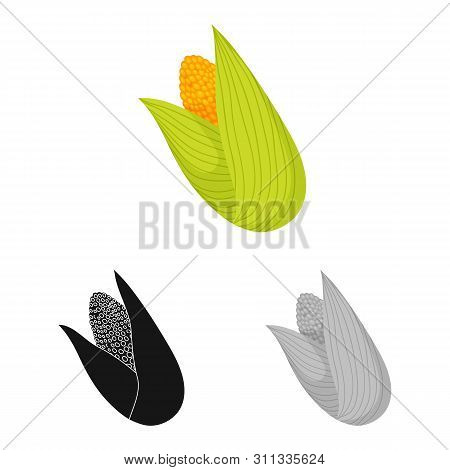 Vector Design Of Cob And Corn Symbol. Set Of Cob And Sweetcorn Stock Vector Illustration.