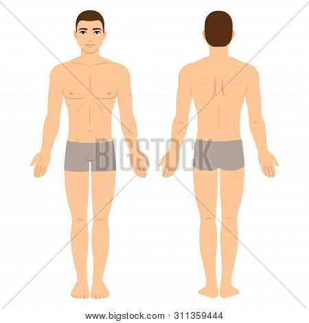 Male Body In Underwear, Front And Back View. Athletic Young Man Physique, Vector Clip Art For Medica