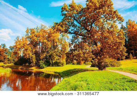 Autumn landscape - yellowed deciduous trees at the bank of the river in city autumn park area. Colorful autumn landscape scene