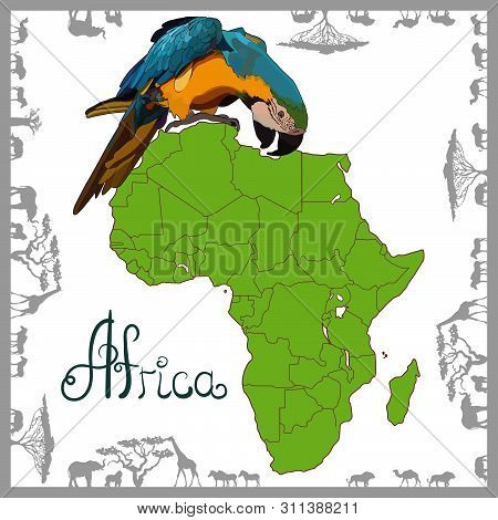 Highly Detailed Map Of Continent, Located On The African Continental Plate With Parrot. Background W
