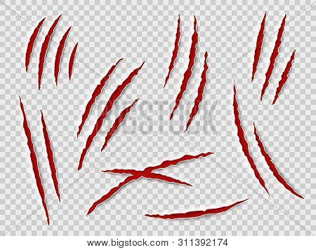Claws Scratches. Animal Claw Tracks, Cat Or Tiger, Bear Or Lion Attack Nails Scratches. Thriller Hor