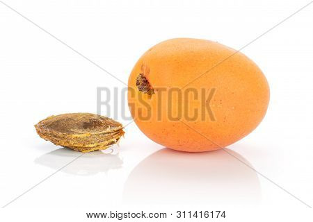 One Whole Meaty Fresh Deep Orange Apricot With A Stone Isolated On White Background