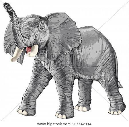 elephant with raised trunk isolated on white background / eps10