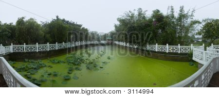 Water Lily Garden In A Rainy Day Panoramic Hong Kong China