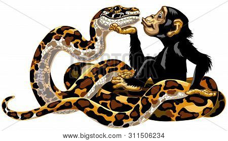 Cartoon Chimpanzee And Python Snake Friendship. Great Ape Or Chimp Monkey Holding A Head Of Charming