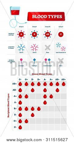 Blood Types Vector Illustration. Educational Labeled Scheme With Donor Group. Infographic With Match