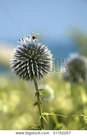 close up shot of thorny plant and a bee