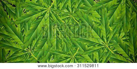 Marijuana Leaf Illustrations On Cannabis Dark Background, Beautiful Background, Top Corner Picture