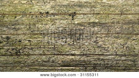 Weathered Wood Detail