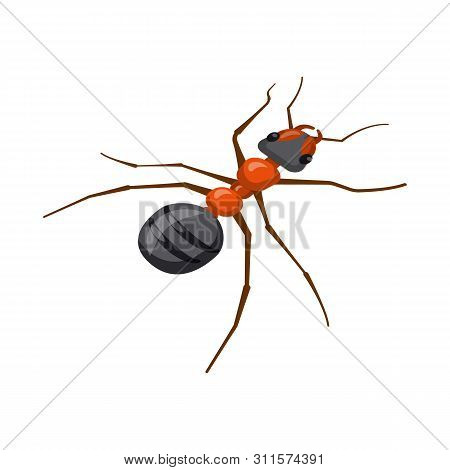 Vector Design Of Ant And Wild Sign. Collection Of Ant And Cute Stock Symbol For Web.