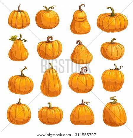 Pumpkin, Squash And Gourd Vegetable Cartoon Icons. Orange And Yellow Autumn Pumpkins With Green Leaf