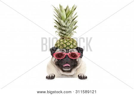 Portrait Of Cute Funny Frolic Summer Pug Puppy Dog With Sunglasses And Pineapple Hat, Hanging With P